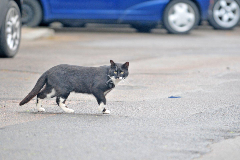 Kodėl katės šlapinasi ne vietoje namuose? Rado, kaip išspręsti šią bėdą.<br>A.Vaitkevičiaus nuotr.