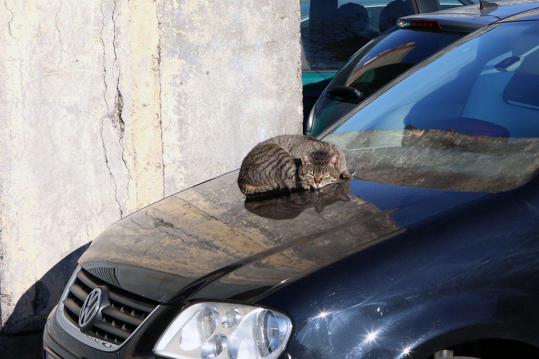 Kodėl katės šlapinasi ne vietoje namuose? Rado, kaip išspręsti šią bėdą.<br>M.Patašiaus nuotr.