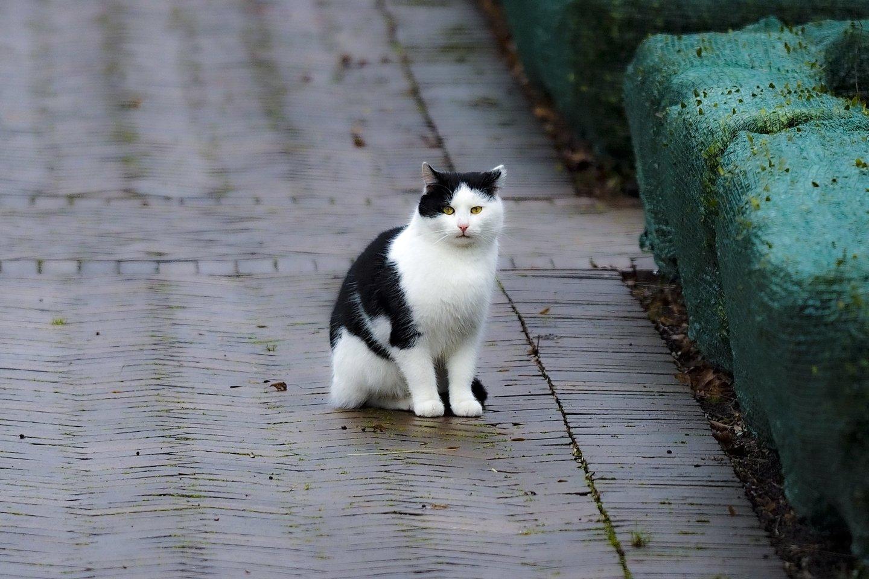 Kodėl katės šlapinasi ne vietoje namuose? Rado, kaip išspręsti šią bėdą.<br>V.Ščiavinsko nuotr.