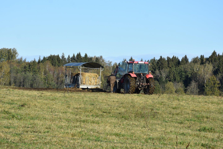 M.Kinderio limuzinų ūkis Leliūnuose.<br>A.Srėbalienės nuotr.