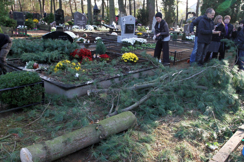 Visi skuba prieš Vėlines sutvarkyti kapus, tačiau yra žmonių, kurie nusprendžia šią paslaugą užsakyti pas kapų tvarkymo įmones.<br>M.Patašiaus nuotr.