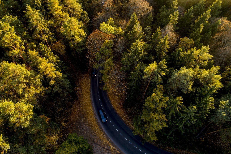 Ruduo Verkių parke,lėktuvai,miškas,saulėlydis,orai<br>V.Ščiavinsko nuotr.
