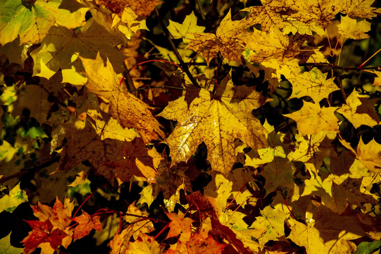 Pirmosiomis lapkričio dienomis bus ramūs orai.<br>V.Ščiavinsko nuotr.