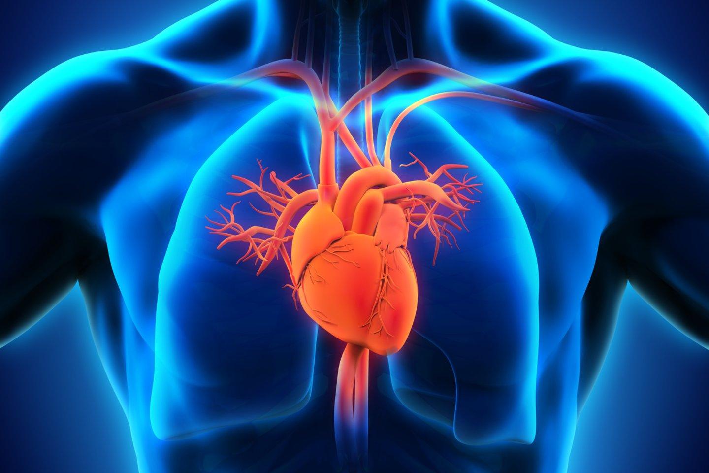 Širdies ir kraujagyslių ligos Lietuvoje yra dažniausia mirties priežastis<br>123rf nuotr.