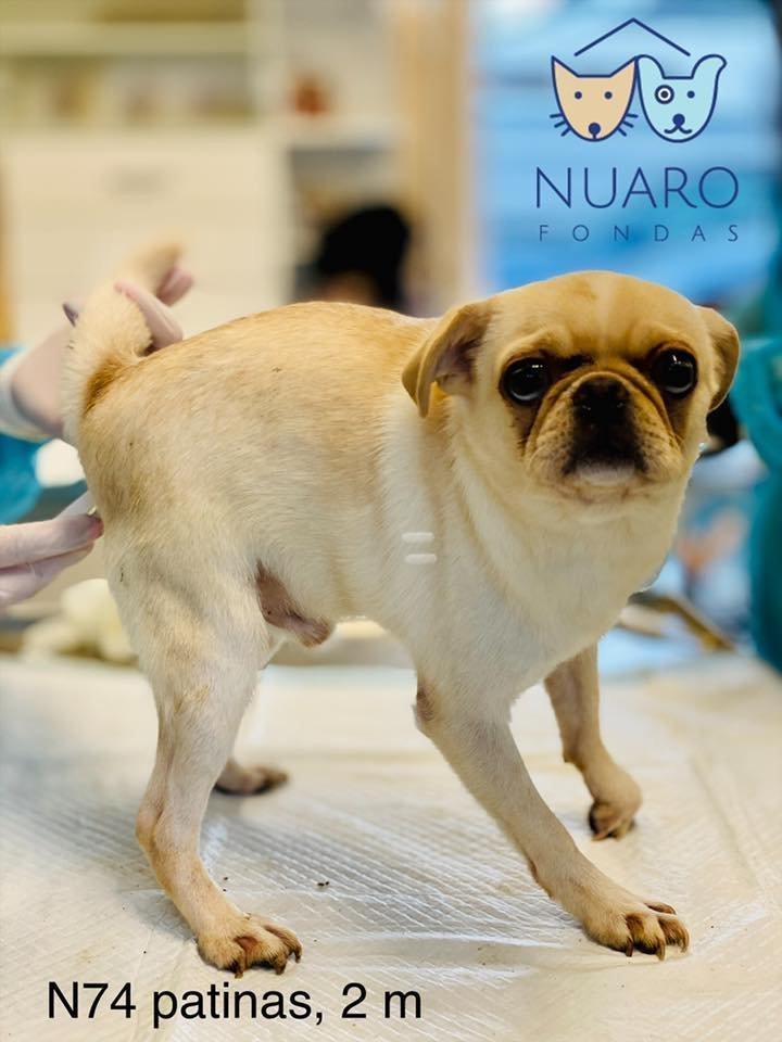 Iš šunų veisyklų išgelbėti šuneliai.<br>Nuaro nuotr.