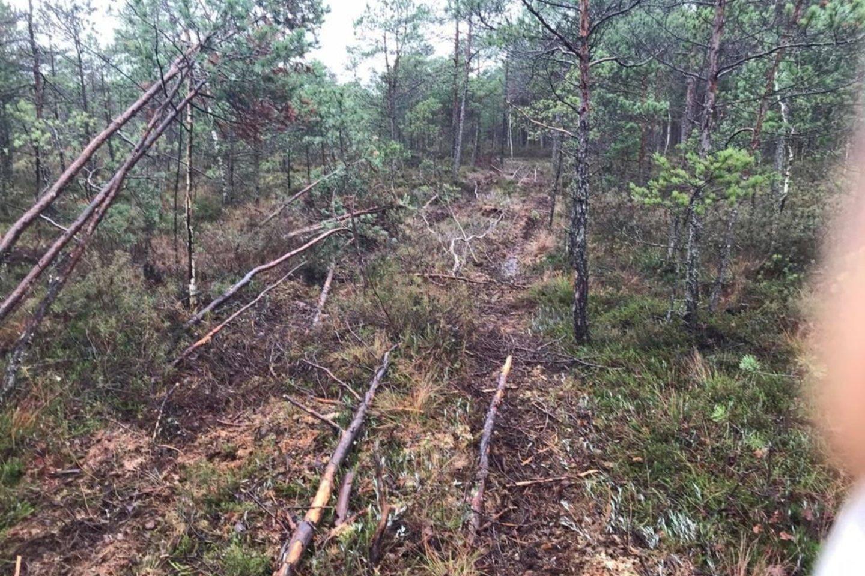 Vaizdo meždžiagoje buvo užfiksuota, kaip visureigiais barbariškai ištaršė unikalų gamtos kampelį.<br>S.Bartmino nuotr.