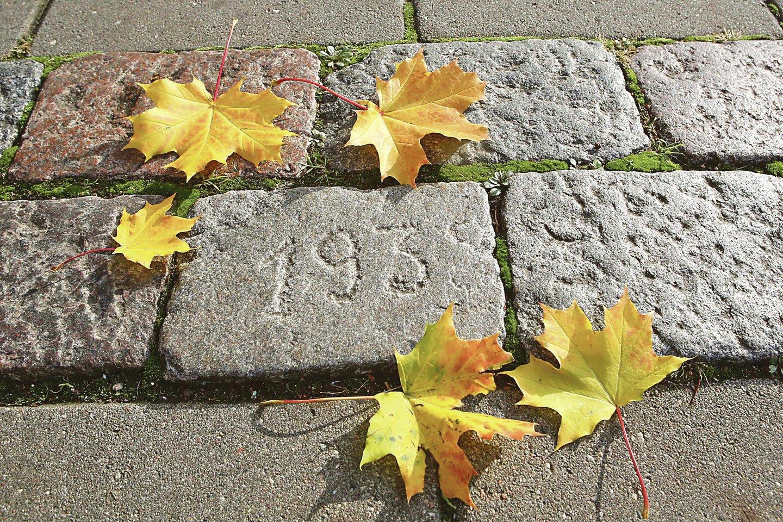 Specialistai atmetė prielaidą, kad ant akmens nurodyta data žymi būtent Vilniaus gatvės istoriją. Greičiausiai šis riedulys atkeliavo iš Žemųjų Šančių.<br>M.Patašiaus nuotr.