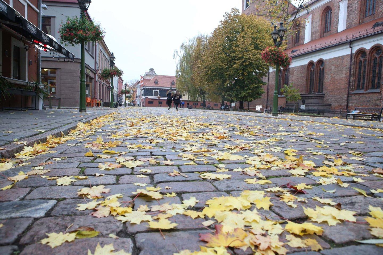 Nors išsiklaipęs Vilniaus gatvės grindinys kelia nepatogumų praeiviams ir dviratininkams, ne visi kauniečiai norėtų, kad seni akmenys būtų nulyginti.<br>M.Patašiaus nuotr.
