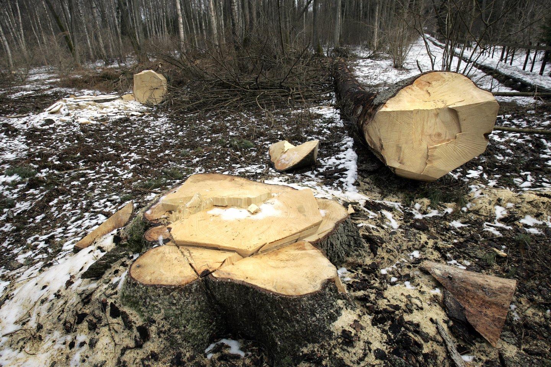 """Kai visas pasaulis suka """"žaliosios"""" žiedinės ekonomikos linkme, miškų vaidmuo nepaprastai didėja, ypač klimato kaitos problemų kontekste.<br>V.Balkūno nuotr."""