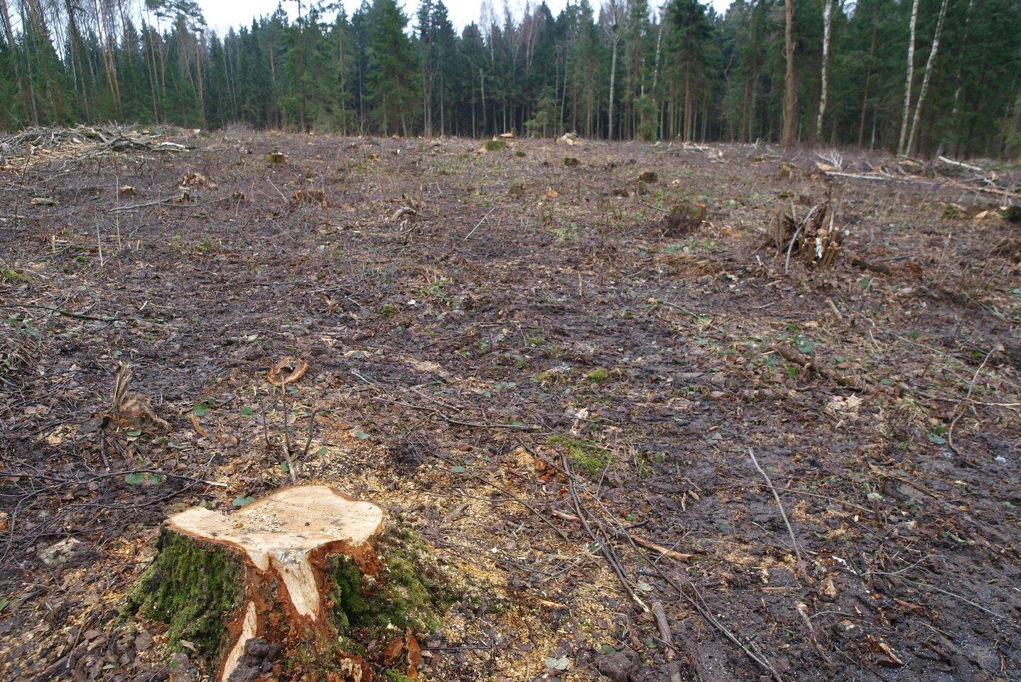 """Kai visas pasaulis suka """"žaliosios"""" žiedinės ekonomikos linkme, miškų vaidmuo nepaprastai didėja, ypač klimato kaitos problemų kontekste.<br>V.Ščiavinsko nuotr."""