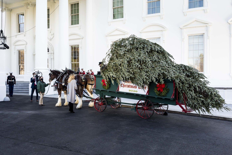 Į Baltuosius rūmus atitempta Kalėdų eglė.<br>Scanpix nuotr.