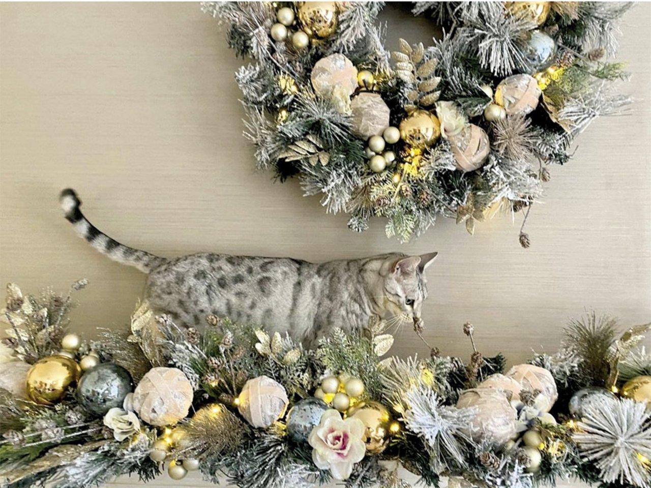 A.Valentaitės katinas.<br>Soc. tinklų nuotr.