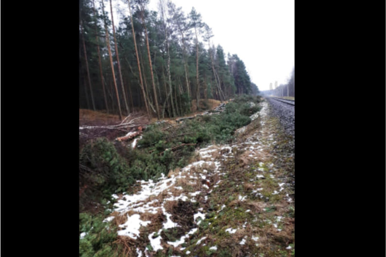Kertamas miškas palei geležinkelį Girulių miške.<br>S. Olenin nuotr.