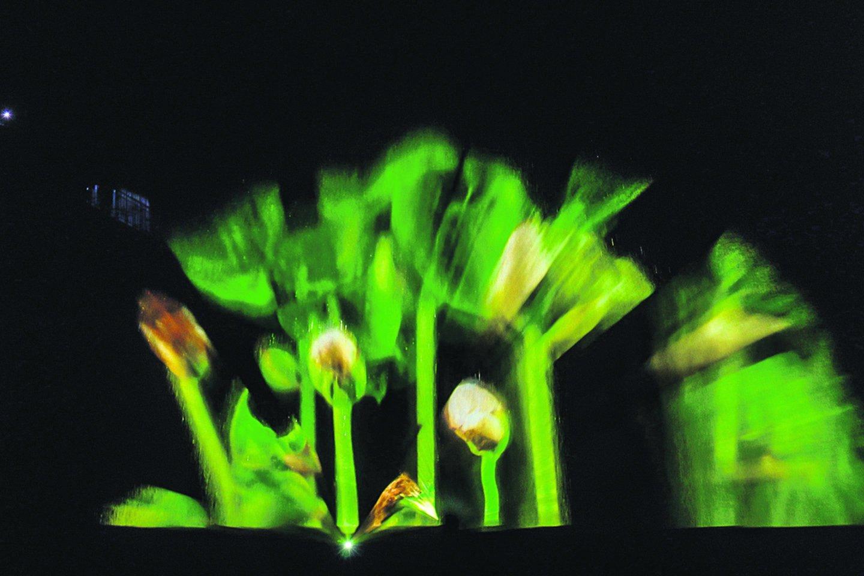 Lietuviai festivalyje pristatė įspūdingą lazerių technologija paremtą pasirodymą.