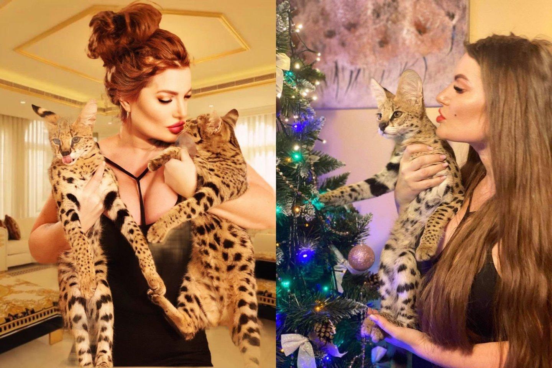 Šiemet Gražinos Asipauskaitės namuose apsigyveno dvi egzotiškos katės.<br>Asmeninio archyvo nuotr.