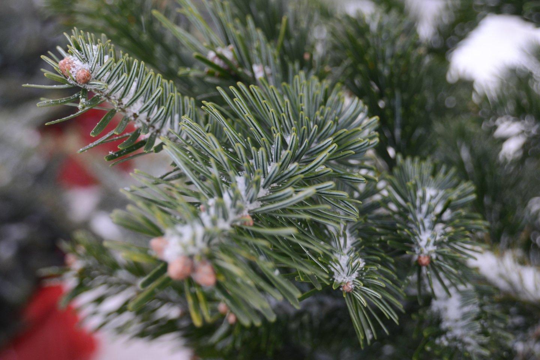 Vilniaus meras R. Šimašius kviečia sodinti Kalėdų mišką.<br>kiti