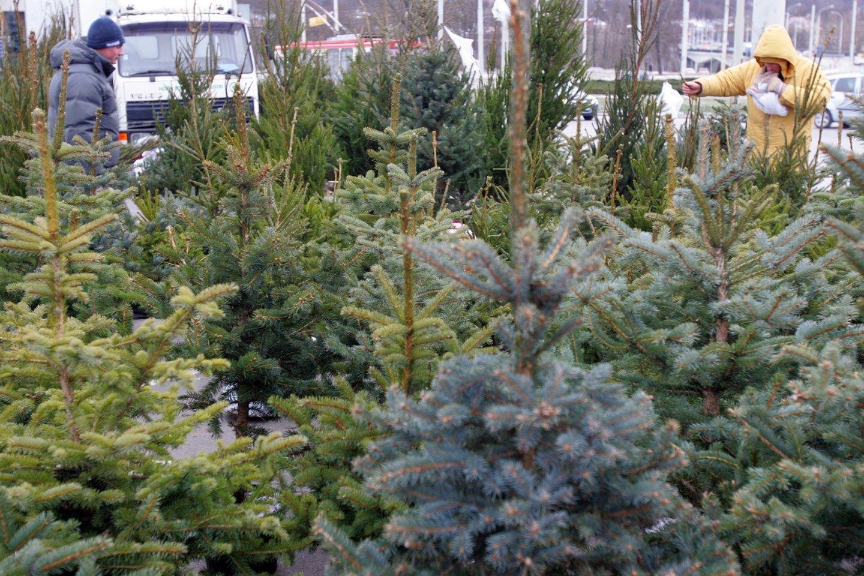 Šalia Žirmūnų žiedo prekiaujama eglutėmis ir šakomis. Kalėdos, eglutės<br>V.Balkūno nuotr.