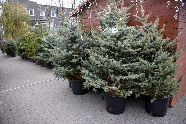 Vilniaus meras R. Šimašius kviečia sodinti Kalėdų mišką.<br>D.Umbraso nuotr.