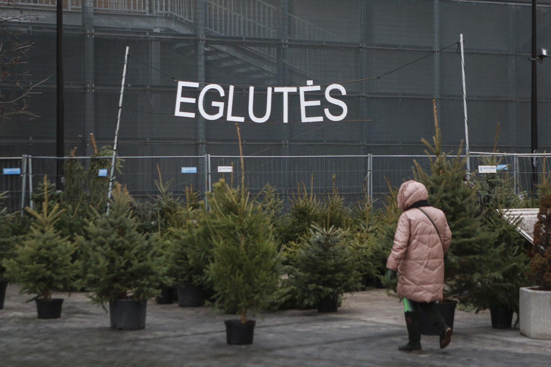 Vilniaus meras R. Šimašius kviečia sodinti Kalėdų mišką.<br>G.Bitvinsko nuotr.