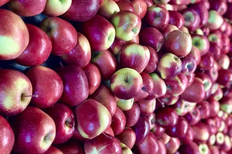 Obuolys – paprastas ir skanus būdas pasisavinti vitaminams ar tiesiog sveikai užkąsti.