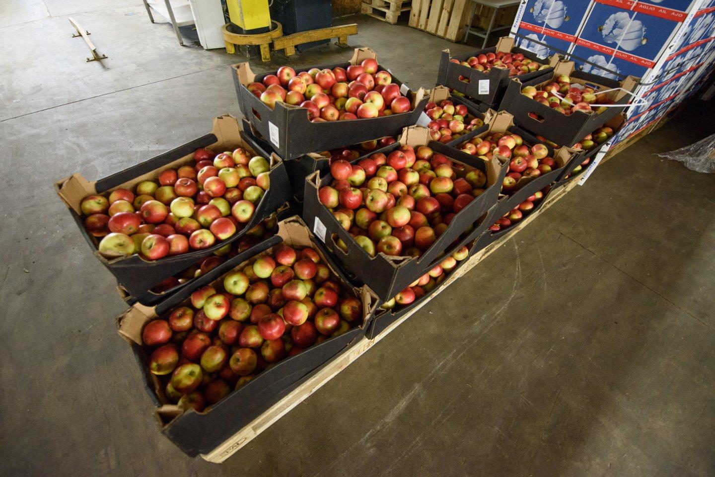 Lietuvoje mažose parduotuvėlėse prekyba obuoliais sustojo.<br>D.Umbraso nuotr.