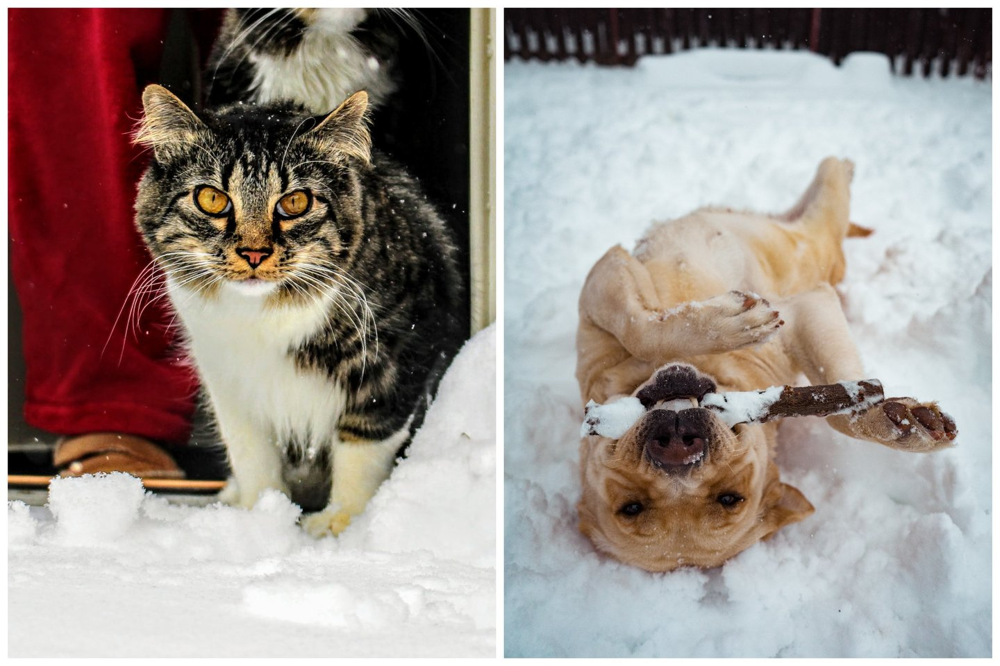 10 specialistų patarimų, kaip tinkamai prižiūrėti gyvūnus žiemos metu.<br>Pexels.com nuotr.