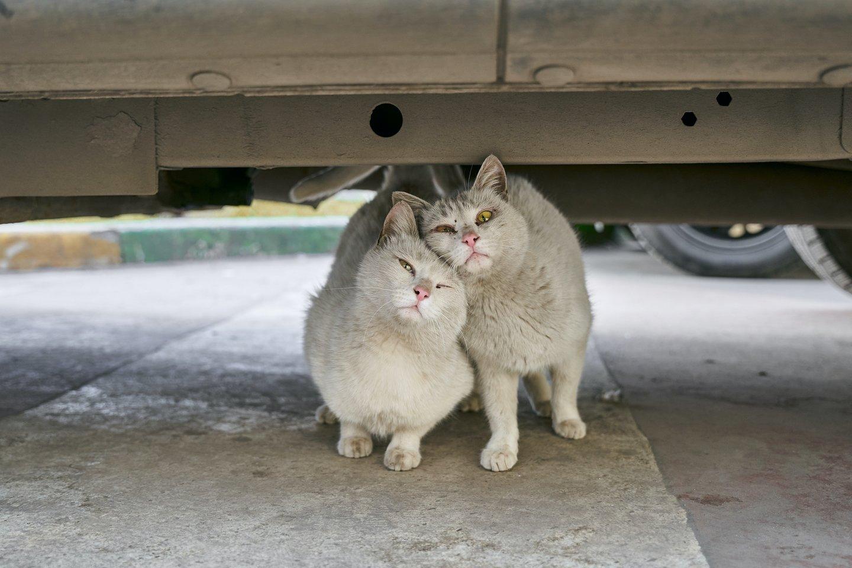 Kaip padėti lauke gyvenantiems gyvūnams esant dideliems šalčiams bei kur kreiptis nutikus nelaimei?<br>Pexels.com nuotr.