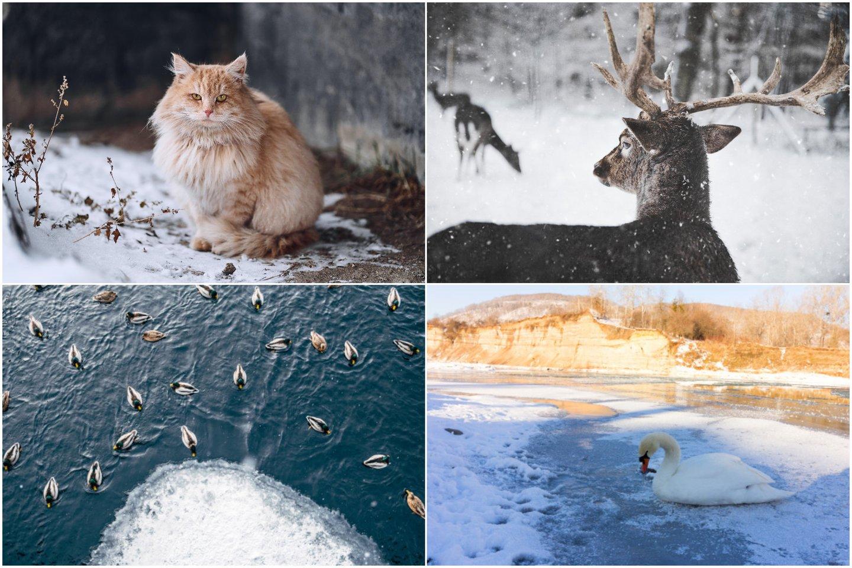 Kaip padėti lauke gyvenantiems gyvūnams esant dideliems šalčiams bei kur kreiptis nutikus nelaimei?