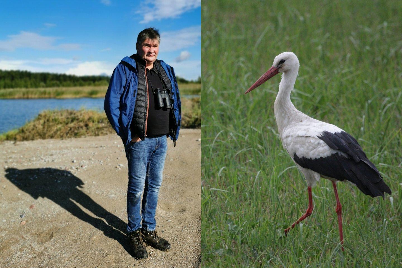 Pesimistinė prognozė: po kelių dešimtmečių nacionalinis paukštis baltasis gandras taps, kaip ir senieji mirštatys Lietuvos kaimai – taps didele retenybe.<br>G. Petkaus nuotr.