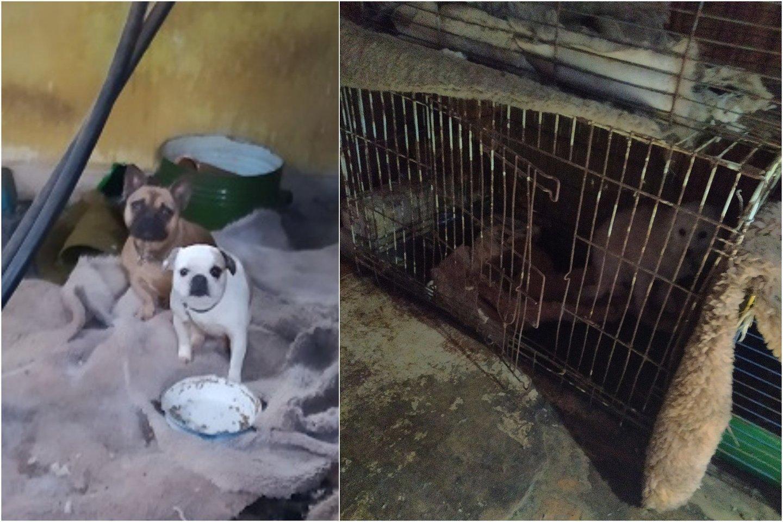 Gyvūnų gelbėtojus teismui apskudusi moteris užtarimo nesulaukė: augintiniai iš jos paimti teisėtai.<br>VMVT asociatyvi nuotr.