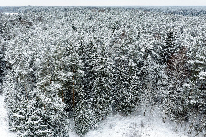 Europos Komisija (EK) paprašė Lietuvos pasiaiškinti dėl draudimo vienam asmeniui įsigyti daugiau kaip 1,5 tūkst. hektarų miško.<br>V.Ščiavinsko nuotr.