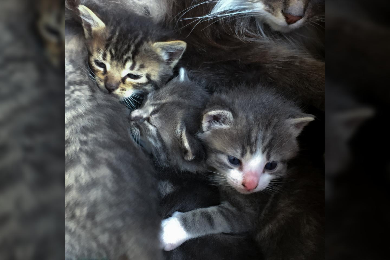 Kačiukai.<br>V.Ščiavinsko asociatyvi nuotr.
