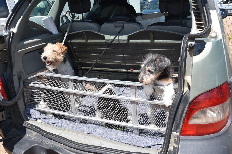Vyriausybė pritarė pokyčiams dėl gyvūnų pardavimo: tikisi užkirsti kelia nelegalioms veisykloms.<br>A.Srėbalienės nuotr.