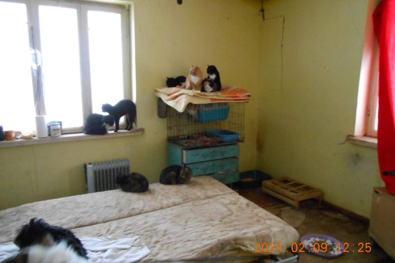 Pareigūnai Pasvalio rajone paėmė per pusšimtį netinkamai laikomų šunų ir kačių.<br>VMVT nuotr.