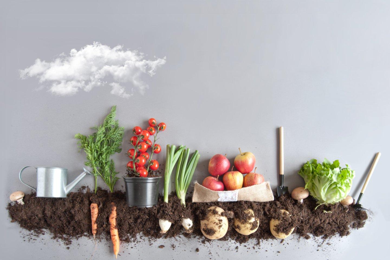 Ekologiškų produktų gamyboje draudžiama naudoti sintetines kvapiąsias medžiagas bei dažiklius.<br>123rf.com nuotr.