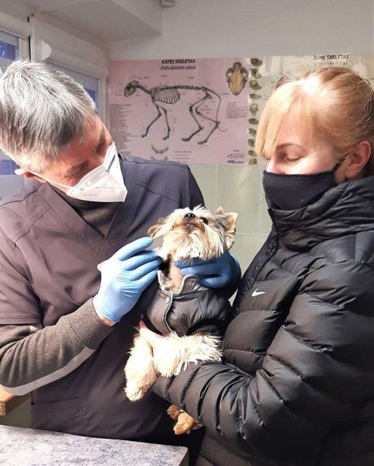 Pas veterinarą į kabinetą atveža tuos ligoniukus, kuriems konsultacijos telefonu neužtenka.<br>Asmeninio albumo nuotr.