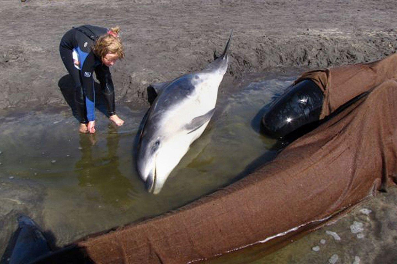 Ant seklumos užplaukė dešimtys delfinų.<br>Scanpix/FP asociatyvi nuotr.