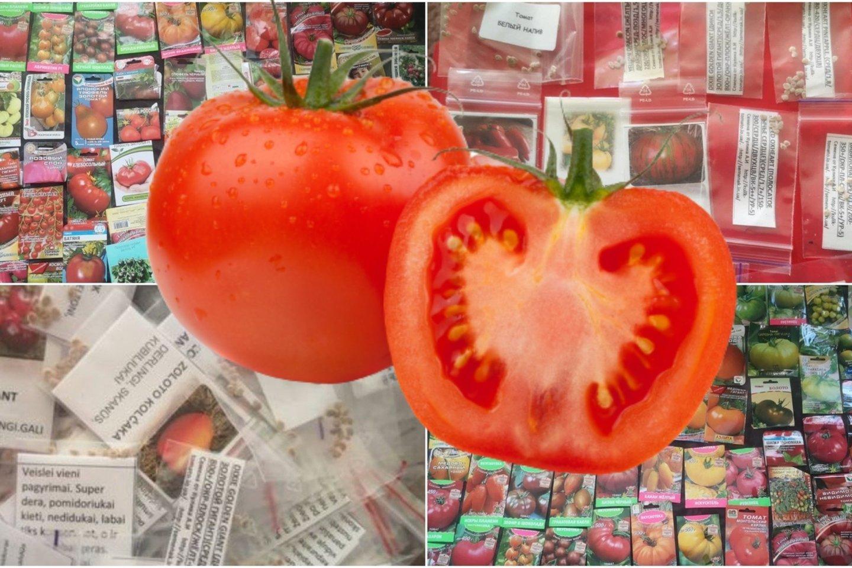 Vasaris – pats laikas apsirūpinti pomidorų sėklomis.<br>Lrytas.lt montažas