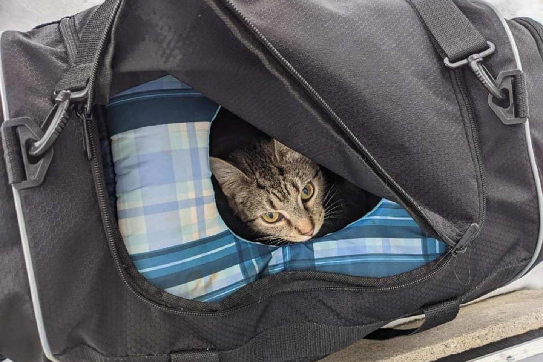 """Pastebėjus """"įtartiną paketą"""" nieko nelaukus buvo iškviestas Butlerio apygardos išminuotojų būrys, kuris krepšyje vietoj pavojingos bombos rado išalkusią katę ir šešis jos žavius vienos dienos kačiukus.<br>Butlerio apygardos šerifo biuro """"Facebook"""" nuotr."""