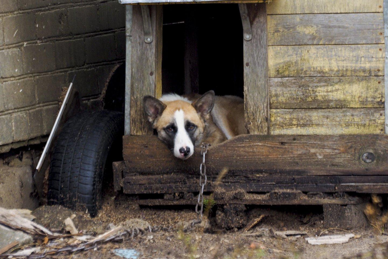 Šuo.<br>V.Ščiavinsko nuotr.
