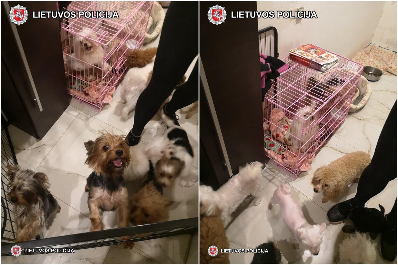 Pareigūnai moters namuose aptiko 27 šunis (jorkšyrai, maltos bišonai ir pudeliai), iš jų 15 jauniklių.<br>Policijos nuotr.