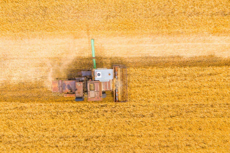 Praėjusių metų Rusijos grūdų derlius – 10,2 proc. solidesnis nei 2019-ųjų.<br>123rf