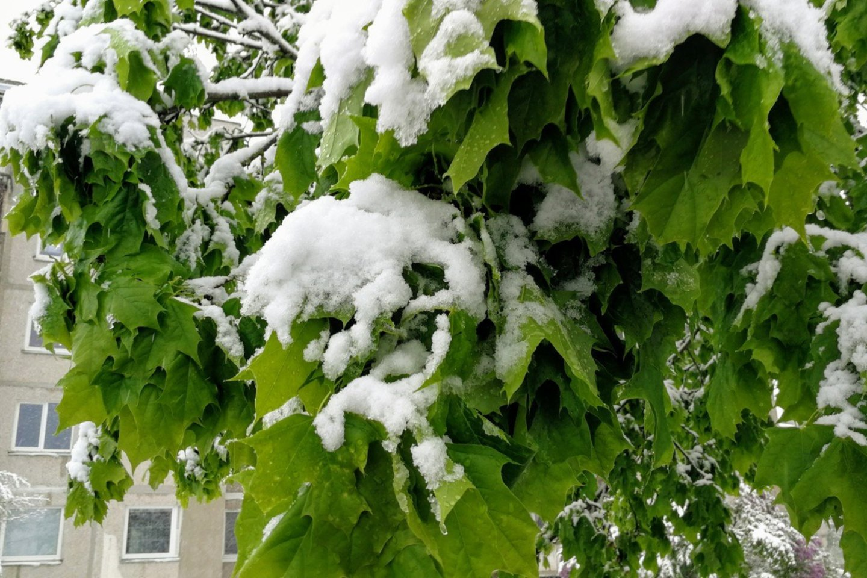Pavasaris, sniegas, pasnigo, gamta, gamtos pokštai, orai, Kaunas<br>M.Patašiaus nuotr.