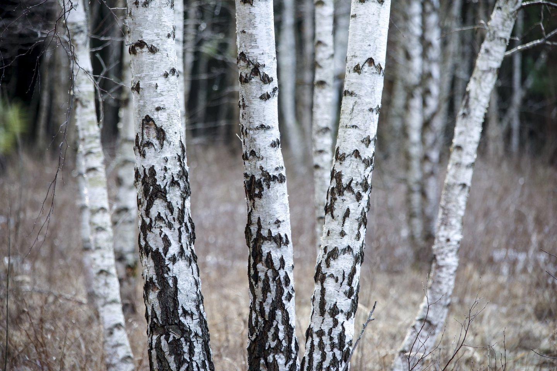 Prie gamtos išsaugojimo prisidėti galime kiekvienas.<br>V.Ščiavinsko nuotr.