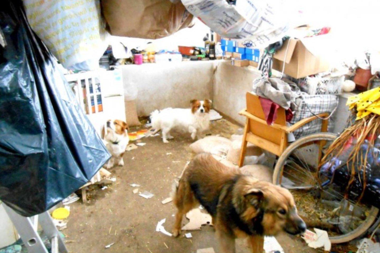 Šlamštu užgriozdintuose kambariuose buvo įkurdinta gausybė šunų ir kačių.<br>Valstybinės maisto ir veterinarijos tarnybos nuotr.