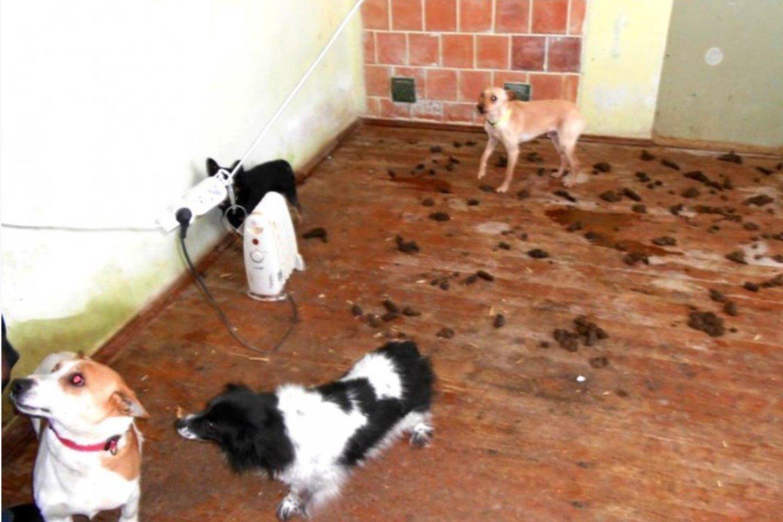 Name laikytų gyvūnų į lauką niekas neleido, jie tuštinosi tiesiog ant grindų, ekskrementų kauburiai buvo matyti visur.<br>Valstybinės maisto ir veterinarijos tarnybos nuotr.