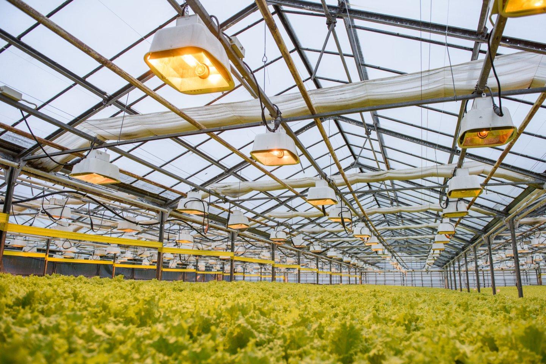Parduotuvių lentynos lietuviškomis daržovėmis – agurkais, salotomis ir pomidorais – nukrautos jau nuo pirmos kovo savaitės.<br>D.Umbraso nuotr.