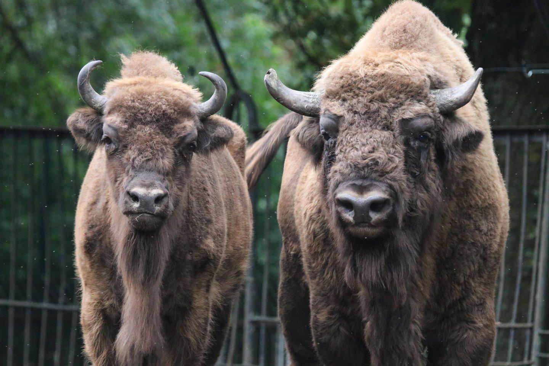 Zoologijos sodas atveria duris lankytojams.