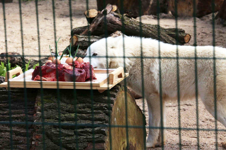 Zoologijos sodas atveria duris lankytojams.<br>M.Patašiaus nuotr.