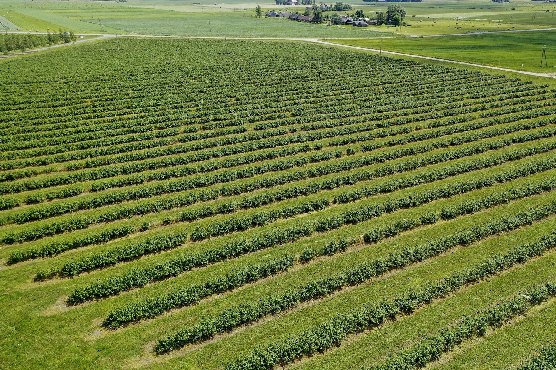 Ko gero, niekas neprieštarautų, kad vietinių ūkininkų auginama produkcija atsidurtų ir ant darželinukų stalo. Tačiau šis mechanizmas sunkiai veikia.<br>V.Ščiavinsko nuotr.